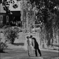 tonefield weddings photographer eva hadhazy